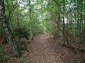 Kowanowko forests, gm. Oborniki (12).JPG