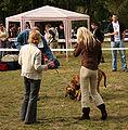 Krajowa Wystawa Psów Rasowych Rybnik 2006 Fila w ringu.jpg