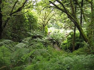 Derreen Garden - Woodland in Derreen Garden