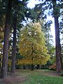 Laurelhurst Park, fall colors in 2011.JPG