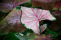 Leafy Fractals (14823870239).jpg