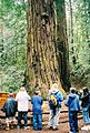 Learning about the Redwoods.jpg