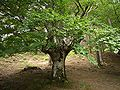 Leintz-woodlands-4598.jpg