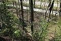 Leitenwälder der Isar 0584.jpg