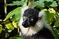 Lemur (26245096519).jpg