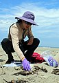 Lena Chang, senior fish and wildlife biologist with the Service in Ventura, and volunteer coordinator for the South Coast Chapter of BeachCOMBERS, examines a bird carcass during a survey of Hollywood Beach. (36220761671).jpg