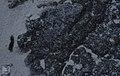 Lichen action. Back of seaward dune. Little San Salvador. (27093670939).jpg