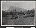 "Like nedenfor Sørehjallen seter. Betula tortuosa, salix glauca, Juniperus communis, Salix nigricans, Aconitum. Nardusgrusmark på de åpne partier. 9. juli 1929"" - no-nb digifoto 20150925 00055 bldsa HRH01 046.jpg"