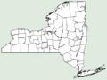 Linaria maroccana NY-dist-map.png