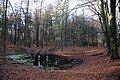 Little pond for animals in the Rozendaal forest - panoramio.jpg