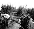 Loading logs at Camp 1, McDougal and Biladeau Logging Co, Ravensdale (CURTIS 992).jpeg