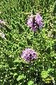 Local flora (MakGi) (34143324094).jpg