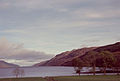 Loch Ness and Sheep - geograph.org.uk - 1766612.jpg