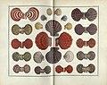 Locupletissimi rerum naturalium thesauri accurata descriptio, et iconibus artificiosissimis expressio, per universam physices historiam (TAB. LXXXVII) (8389311199).jpg