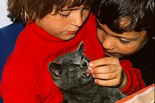 Bambini che nutrono un cucciolo di gatto