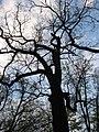 Loshytski Park, праезд Чыжэўскіх 10, Minsk, Belarus - panoramio - Aliaksandr Palanetsk… (1).jpg