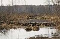 Losinyj ostrov 1 Пейзаж Лосиный остров.78.jpg