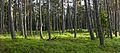 Luitemännik Nõva maastikukaitsealal.jpg