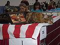 MTP Cat Show 2230106.JPG