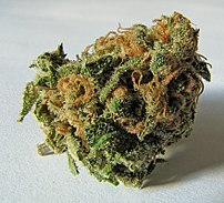 A dried flowered bud of the Cannabis sativa plant.