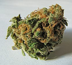 Presidenten hjalp oss legalisera marijuana