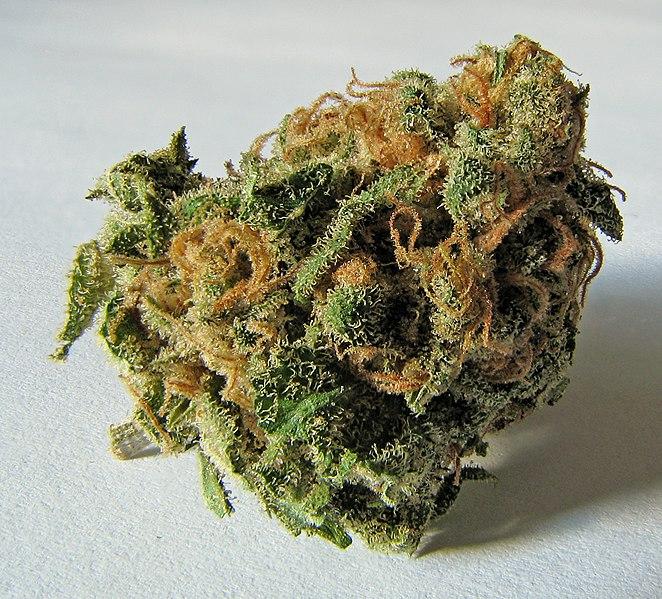 File:Macro cannabis bud.jpg
