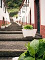 Madeira 1154 (33493860330).jpg