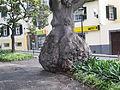 Madeira em Abril de 2011 IMG 1730 (5663755422).jpg