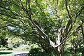 Maple (4296507200).jpg