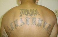 Marasalvatrucha13.png