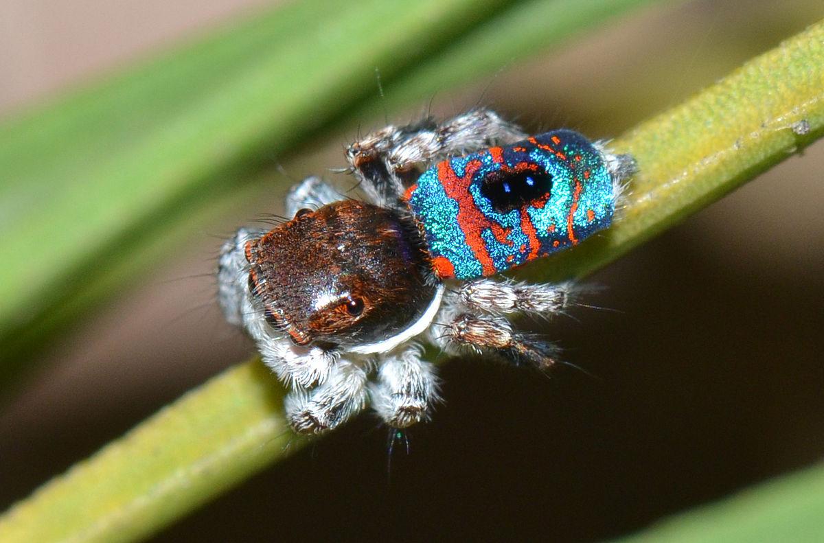 Fliegende Spinne