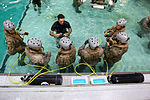 Marines, Sailors of SP-MAGTF Africa 13.3 gain confidence at helo dunker 130603-M-MA421-138.jpg