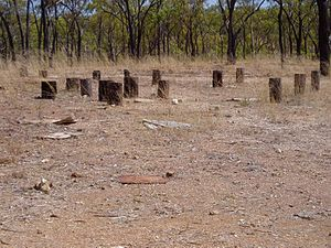 Maytown, Queensland - Maytown ruins, possibly stumps of the former school, 2003