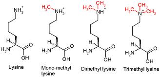 H3K27me3 - Methylation-lysine