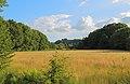 Mettingen Naturschutzgebiet Rote Brook 06.JPG