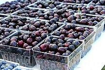 Michigan-Agriculture-Michigan Cherries, 2009 July