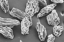 Micrograph of Rockland Ash.jpg
