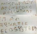 Microplastics- an emerging pollutant in an aquatic ecosystem.png