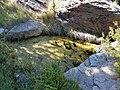 Middle Spring area at Cimarron National Grassland (19725fe254c343dd9d475c337a0b038b).JPG