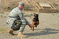Military Working Dogs Impact Security at Kirkuk DVIDS128656.jpg