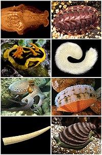 Mollusca Diversity.jpg