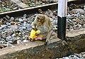Monkey on Railway line at Vriddachalam India. Photo by Pastor Daniel - panoramio.jpg