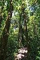 Monteverde Reserve Costa Rica 13.jpg