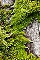 Moos - Steiermark 2.jpg