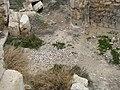 Mosaic Floor at Kom el Dikka (II).jpg