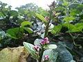 Moth flowers left side.jpg