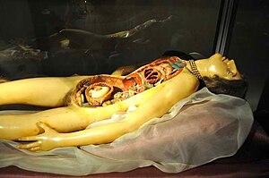 """Clemente Susini - The """"Venerina"""", displayed in the Museum of Palazzo Poggi, Bologna"""