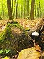 Mushroom1112.jpg