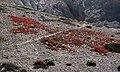 Mustang-Chhusang-90-Buesche mit roten Fruechten-2015-gje.jpg