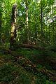 Národná prírodná rezervácia Stužica, Národný park Poloniny (16).jpg